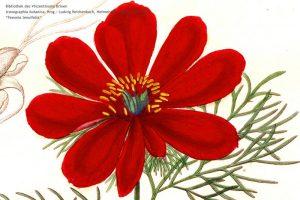 Iconographia_botanica_2
